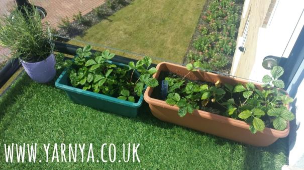 Green Fingers - Vegtable Garden on a Balcony www.yarnya.co.uk