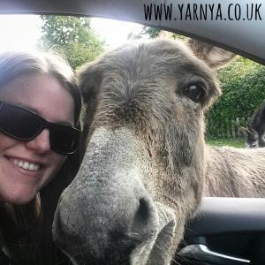 Sunday Sevens (27th September 2015) www.yarnya.co.uk New Forest Donkey
