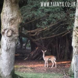 Sunday Sevens (27th September 2015) www.yarnya.co.uk New Forest Deer