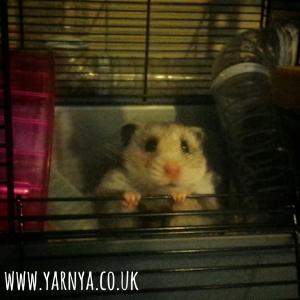 Sunday Sevens (4th October 2015) www.yarnya.co.uk Cuteness hamster