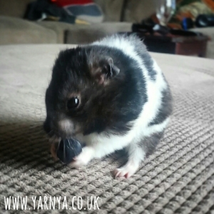 Sunday Sevens (25th October 2015) www.yarnya.co.uk hamster blueberry