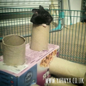 Sunday Sevens (1st November 2015) hamster tunnels