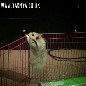 Sunday Sevens (1st November 2015) www.yarnya.co.uk hamsters escaping