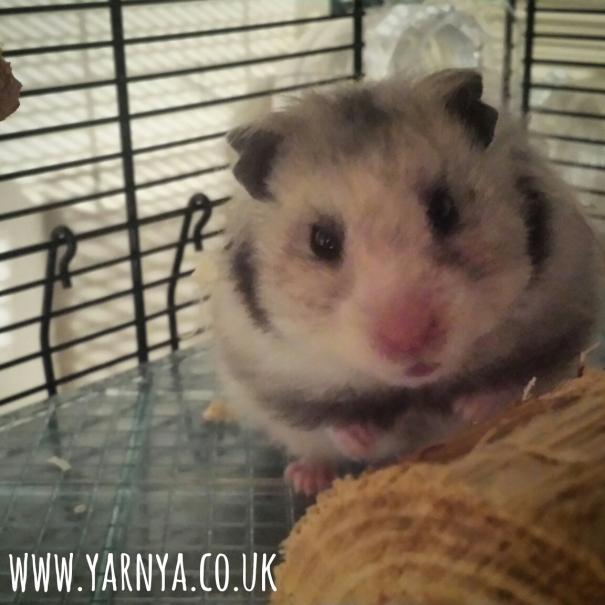 Sunday Sevens (15th November 2015) www.yarnya.co.uk hamster